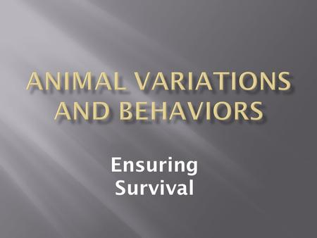 Ensuring Survival. As you watch this presentation, make a list of how the variations, adaptations, or behaviors enhance the survival of animals. Include: