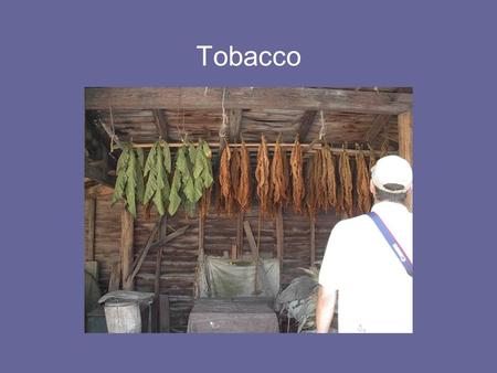Tobacco. Virginia Standard of Learning VS.4 The student will demonstrate knowledge of life in the Virginia Colony by a)Explaining the importance of agriculture.