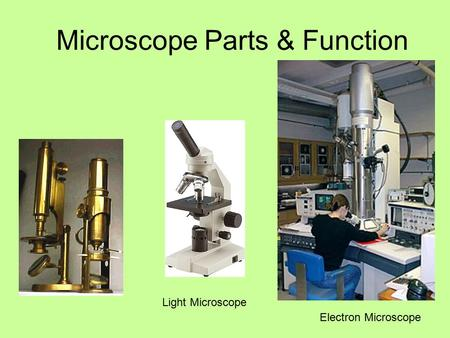 Microscope Parts & Function