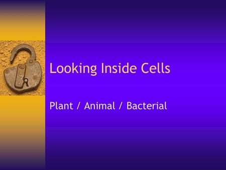 Looking Inside Cells Plant / Animal / Bacterial. Cell Size  Most cells range in size between 1 to 100 micrometers  In 1 meter there are 100,000 micrometers.