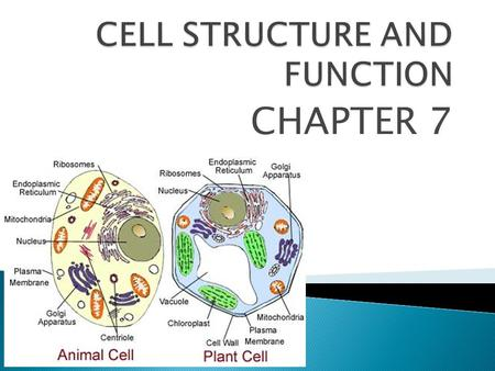 CHAPTER 7.  The CELL is the basic unit of structure and function in living things.  CELL THEORY states ◦ 1. All living things are composed of cells.