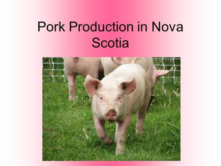 Pork Production in Nova Scotia. Terms to Know Sow: Adult female pig. Boar: Adult male pig. Often kept for breeding purposes. Barrow: A neutered male pig.
