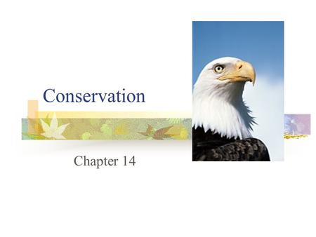 Conservation Chapter 14. Wildlife Resources  What is happening to the wildlife and plant resources around us today?