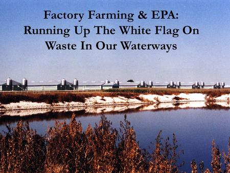 Factory Farming & EPA: Running Up The White Flag On Waste In Our Waterways.