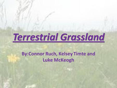 Terrestrial Grassland By:Connor Ruch, Kelsey Timte and Luke McKeogh.