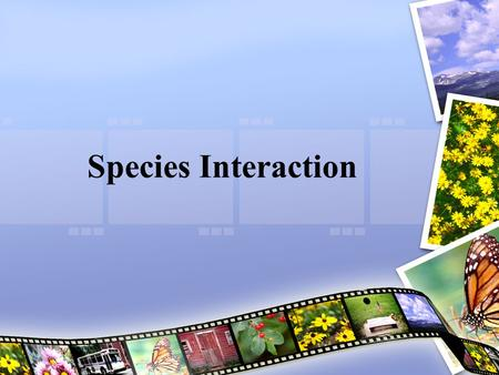 Species Interaction. Questions for Today: What are the five ways species interact with each other? How does competition effect species interactions? Describe.