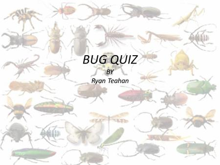 BUG QUIZ BY Ryan Teahan.