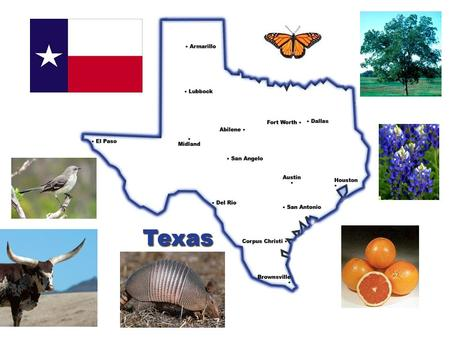 South Texas Major Cities: *Houston *San Antonio.