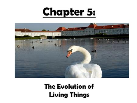 Chapter 5: The Evolution of Living Things.