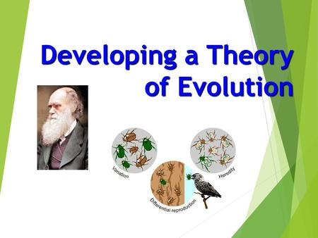 Developing a Theory of Evolution. Evolution processes earliest forms diverse  The processes that have changed life on earth from it's earliest forms.