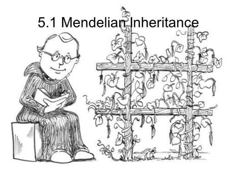 5.1 Mendelian Inheritance. Monks are known for many things…