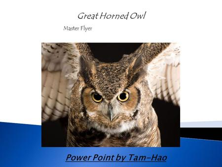 Power Point by Tam-Hao Master Flyer.  The scientific name for a Great Horned Owl is Stringiformes  There are 140 different types of owls  Owls are.