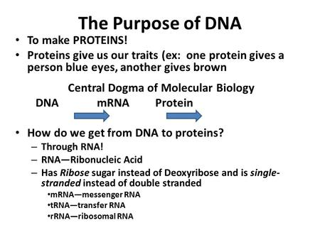 The Purpose of DNA To make PROTEINS! Proteins give us our traits (ex: one protein gives a person blue eyes, another gives brown Central Dogma of Molecular.