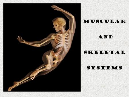 Muscular and Skeletal Systems. Muscle & Skeletons…oh why? 1. Structure & Support of the body. 2. Protection of organs. 3. Movement -Away from danger -Toward.