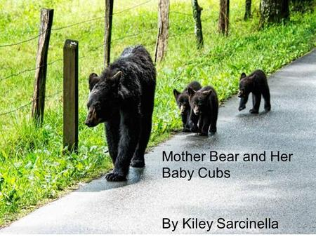 Mother Bear and Her Baby Cubs By Kiley Sarcinella.