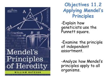 Objectives 11.2 Applying Mendel's Principles -Explain how geneticists use the Punnett square. -Examine the principle of independent assortment. -Analyze.