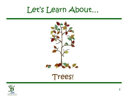 1 Let's Learn About… Trees!. 2 What is a Tree? A tree is a tall, green plant A tree belongs to one of two families –Conifer family –Deciduous family.