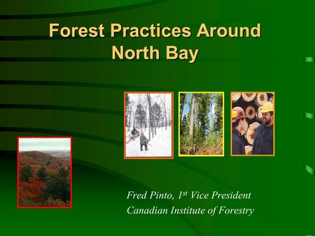 Forest Practices Around North Bay