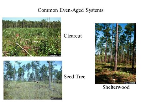 Common Even-Aged Systems Seed Tree Shelterwood Clearcut.