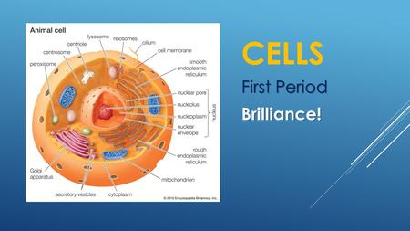 CELLS First Period Brilliance!. CELL MEMBRANE  Semipermeable membrane that surrounds the cytoplasm of the cell.  It controls what enters and exits the.