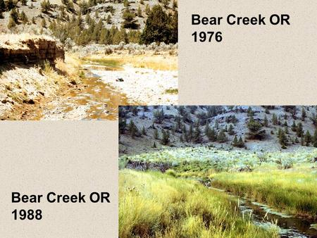 Bear Creek OR 1976 Bear Creek OR 1988. Burro Creek AZ 1981 Burro Creek AZ 2000.