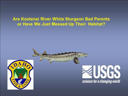 Are Kootenai River White Sturgeon Bad Parents or Have We Just Messed Up Their Habitat?
