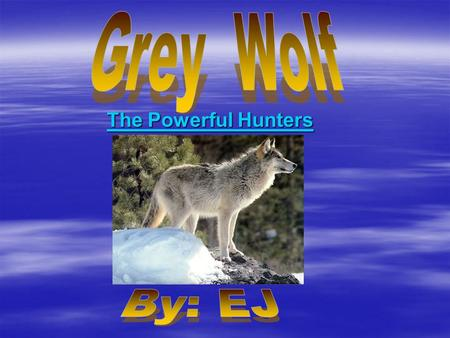The Powerful Hunters. Species  The wolves species is a Canis Lupis.  The grey wolf is a mammal.  And the grey wolf's common name is a Timber Wolf.