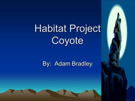 Habitat Project Coyote By: Adam Bradley. Habitat The coyote lives in the desert. It is hot there. There is lots and lots of trees and cacti. There is.