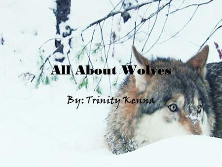 All About Wolves By: Trinity Kenna Introducing: Bella and Jadyn.