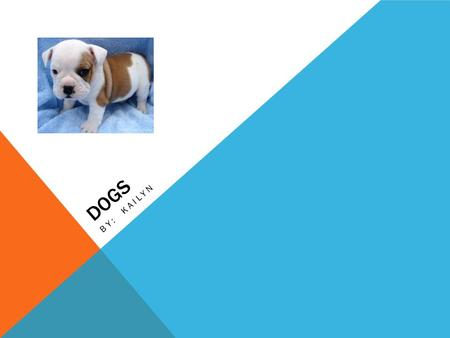 DOGS BY: KAILYN. DOGS ARE MAMMALS We know they are mammals because their mothers nurse their young, their young are born live, they are warm-blooded (101.2.