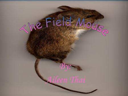 By: Aileen Thai. The Field Mouse is a cousin to the rat and the two share certain attributes. The Field Mouse and the rat have similar colored fur. Their.