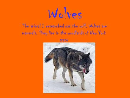 Wolves The animal I researched was the wolf. Wolves are mammals. They live in the woodlands of New York state.