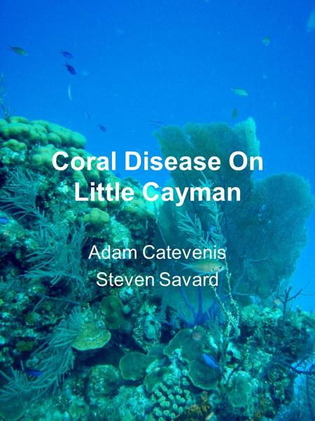 Coral Disease On Little Cayman Adam Catevenis Steven Savard.