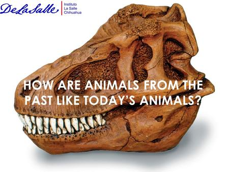 HOW ARE ANIMALS FROM THE PAST LIKE TODAY'S ANIMALS?