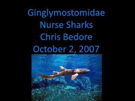 Ginglymostomidae Nurse Sharks Chris Bedore October 2, 2007.