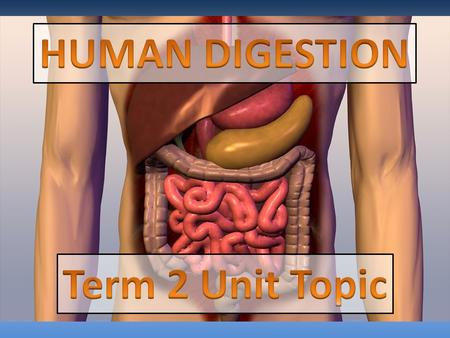 1. To know what the digestive system is. 2. To know what jobs all the organs do.