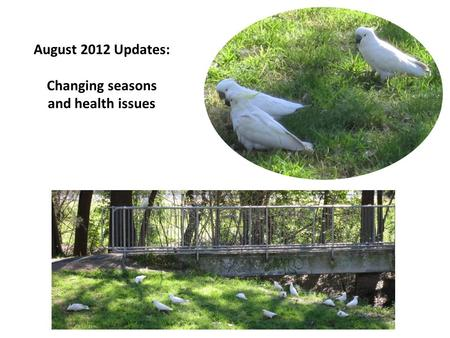 August 2012 Updates: Changing seasons and health issues.