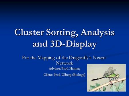 Cluster Sorting, Analysis and 3D-Display For the Mapping of the Dragonfly's Neuro- Network Advisor: Prof. Hannay Client: Prof. Olberg (Biology )