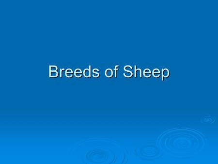 Breeds of Sheep.