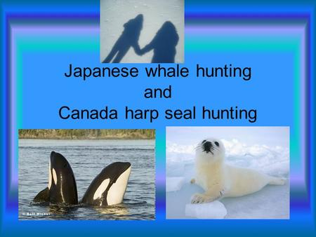 Japanese whale hunting and Canada harp seal hunting.