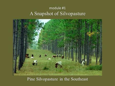 Module #1 A Snapshot of Silvopasture Pine Silvopasture in the Southeast.