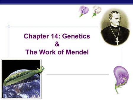 AP Biology Chapter 14: Genetics & The Work of Mendel.