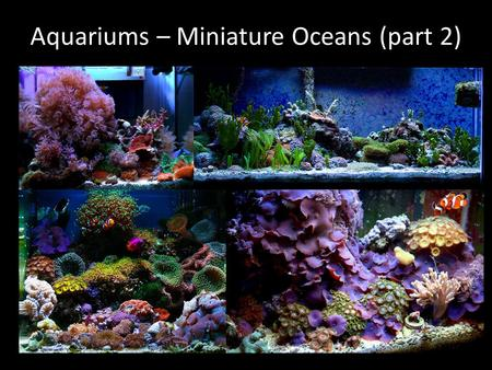 Aquariums – Miniature Oceans (part 2). Photosynthesis, Respiration, and pH Goals – Challenge students to link CO 2 concentrations and pH values – Challenge.