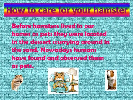 Before hamsters lived in our homes as pets they were located in the dessert scurrying around in the sand. Nowadays humans have found and observed them.