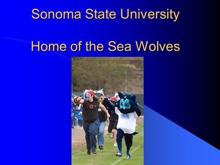 Sonoma State University Home of the Sea Wolves. Available Degrees Bachelor's Degrees include: Anthropology Art Biology Business Administration Chemistry.