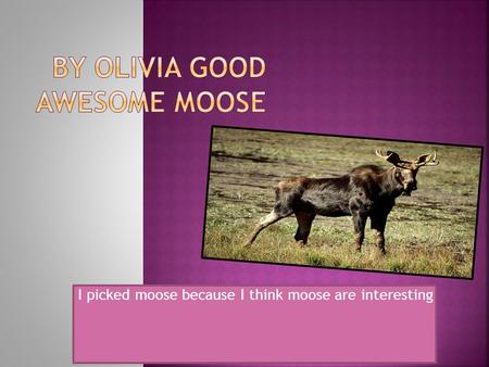 I picked moose because I think moose are interesting.