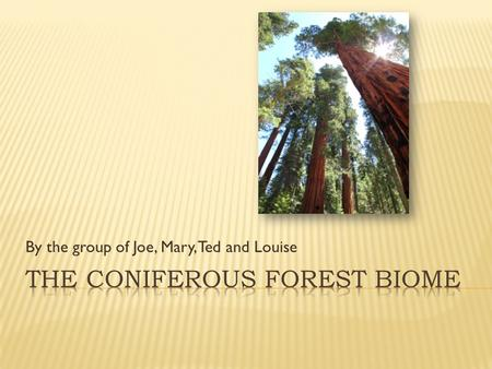 By the group of Joe, Mary, Ted and Louise  Coniferous biomes are located south of the tundra biomes.  The soil thaws every spring making the floor.