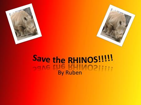 By Ruben. What are Rhinos? The are only two main types of Rhino's all over the world and they are called a black Rhino, plus a white Rhino. The rhinoceros.