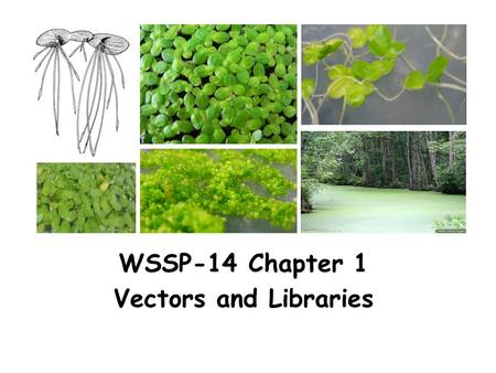 WSSP-14 Chapter 1 Vectors and Libraries.