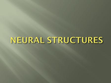  Be familiar with the anatomy and function of the neural structures.  Be familiar with the aim of neural dynamic tests.  Be familiar with the neural.